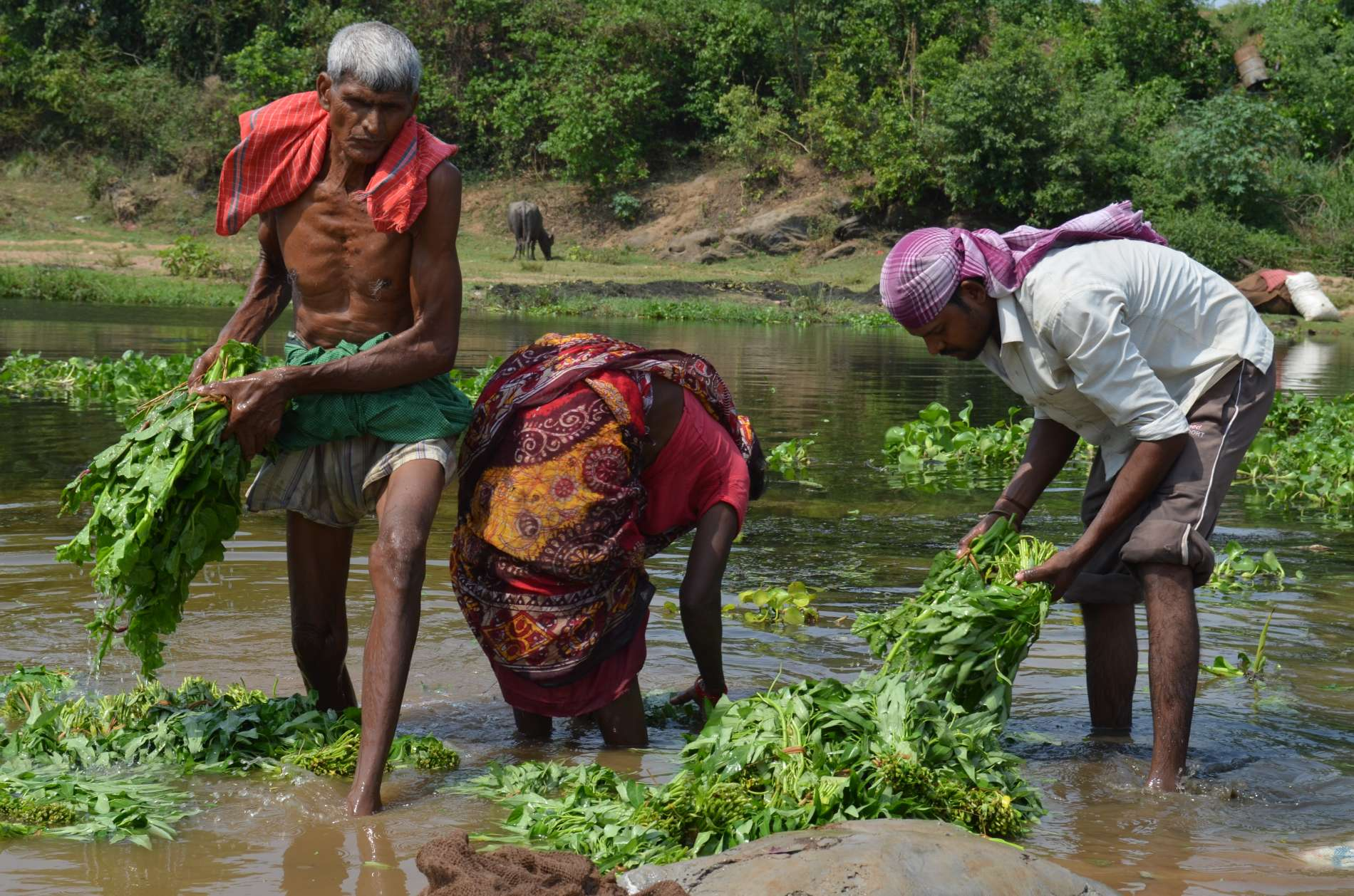 Villagers drink, bathe and wash themselves, their clothes and their food in the tributaries of the Subarnarekha River, which a 2009 study found to be heavily contaminated with alpha radiation, with levels 192 percent higher than safe limits set by the World Health Organization. (Photo:Ashish Birulee)